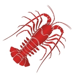 boiled spiny or rock lobster vector image