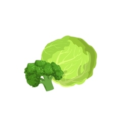 Broccoli And Cabbage Bright Color Isolated vector image vector image