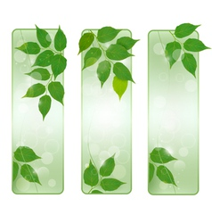 Three nature banners with green fresh leaves vector image