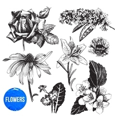 Hand drawn garden flowers set vector image vector image