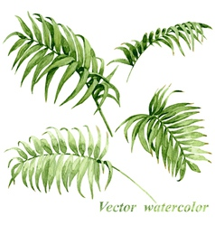 Palm leaves set vector image