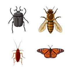insect and fly logo set of vector image