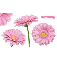 pink dahlia chamomile flowers 3d realistic set vector image