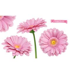 Pink dahlia chamomile flowers 3d realistic set vector