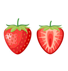 red berry strawberry and a half vector image