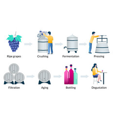 steps wine production process vector image