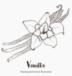 Vanilla Plant vector