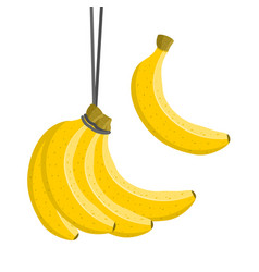 bananas bunch sweet fresh fruit colorful vector image