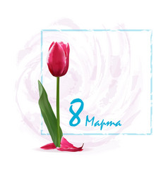 card tulips with frame vector image