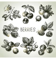 Hand drawn sketch berries set eco food vector