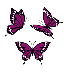 set with butterflies vector image vector image