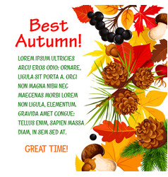 autumn poster template of fall forest nature vector image