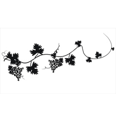 Black silhouette grapes on vine vector