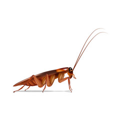 Cockroaches side vector