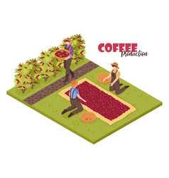 coffee plantation isometric background vector image