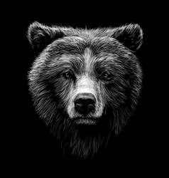 Monochrome portrait a brown bear looking ahead vector