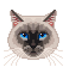 pixel siamese cat face isolated vector image