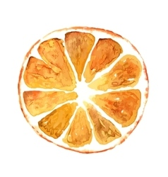Slice of orange isolated on white background vector image