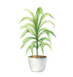 Watercolor clipart with a dracaena in a vector