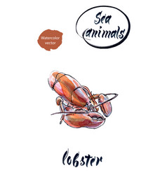 lobster watercolor hand drawn vector image vector image