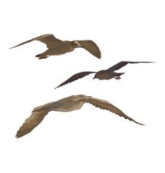 Birds gulls set vector