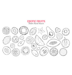 exotic fruits and tropical berries set vector image