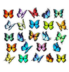 big group colorful butterflies flying in vector image