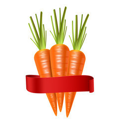 carrots realistic isolated on white 3d vector image