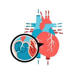 Close-up blood circulation in heart human vector