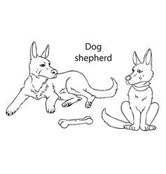Dog German shepherd on white background vector