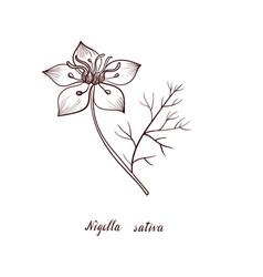Drawing black seed flower vector