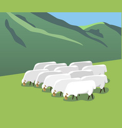 Flock of sheep on a mountain pasture vector