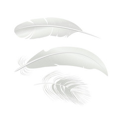 realistic detailed 3d white bird feathers set vector image