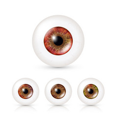human eyeballs set with big irises in colour vector image vector image