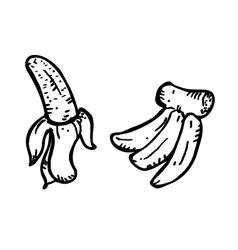 banana doodle vector image vector image