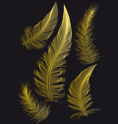 gold feathers drawings vector image