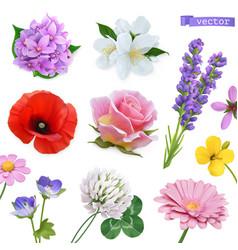 spring flowers lilac jasmine poppy rose lavender vector image