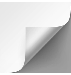 Curled corner of White paper on Gray Background vector image vector image