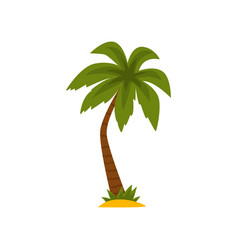beautiful green tropical palm tree vector image
