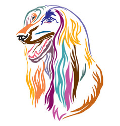 Colorful decorative portrait of afghan hound dog vector