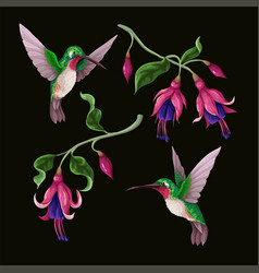 Hummingbirds and tropical flowers isolated trendy vector