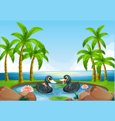 two black ducks in pond vector image