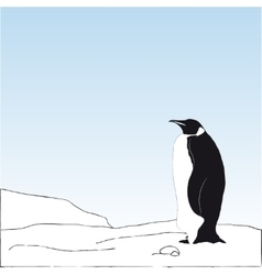 bakcground with penguin on the snow vector image vector image