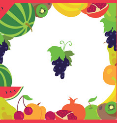 Fruit frame on a white background vector