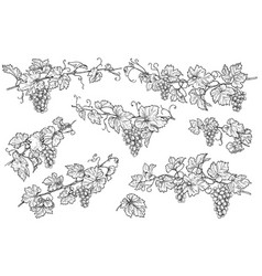 Hand drawn grape branches set vector