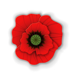 paper art red poppy vector image