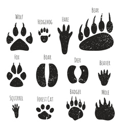 Set of forest animals footprints vector