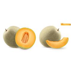Sweet melon cantaloupe 3d realistic icon vector