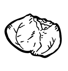 cabbage doodle vector image