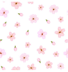 branch of sakura or cherry blossoms background vector image